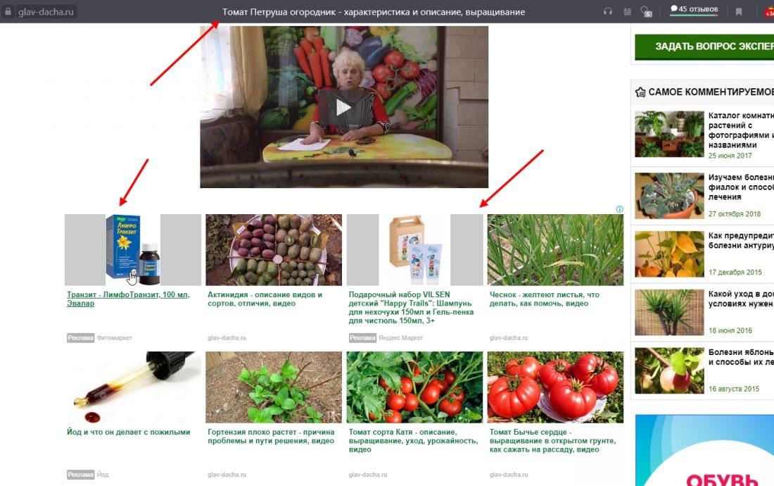 statya pro tomaty na ogorode pokaz reklamy lekarstva i detskogo shampunya